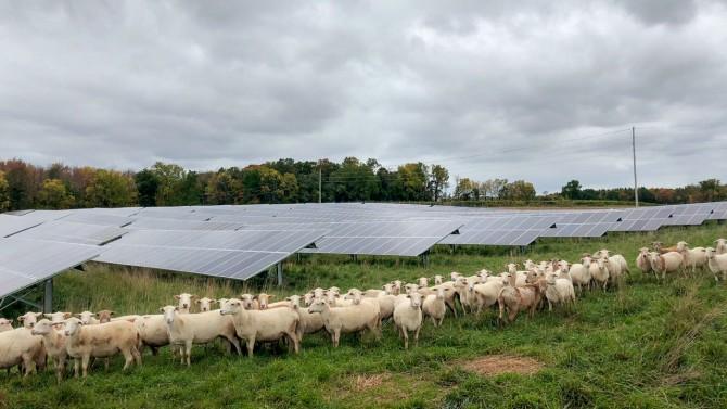 Cornell's Sutton Road Solar Farm in Geneva, New York