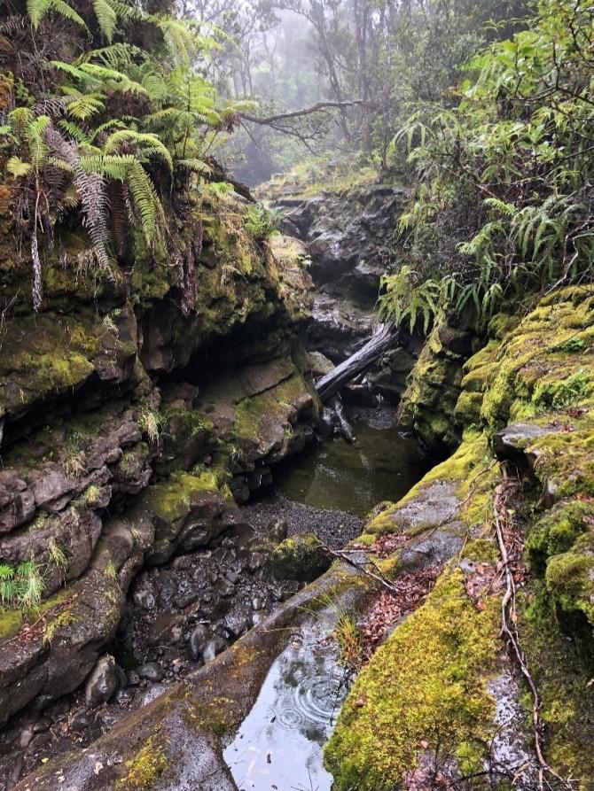 Hakalau Stream in Hakalau National Wildlife Refuge