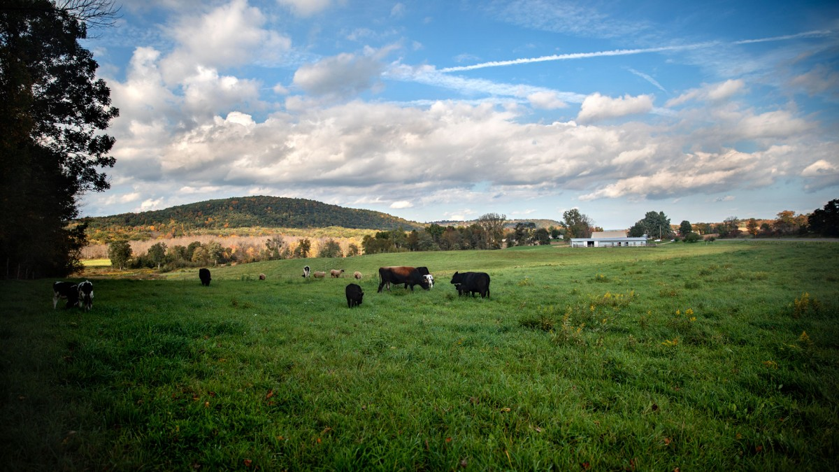 Cornell Farm Ops Sets Up Nys Veterans For Success
