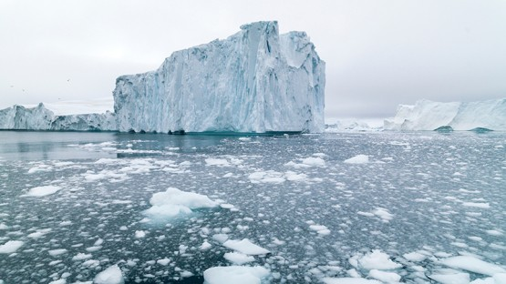 polar ice caps biome