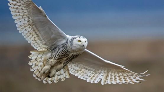 Great Backyard Bird Count takes flight | Cornell Chronicle