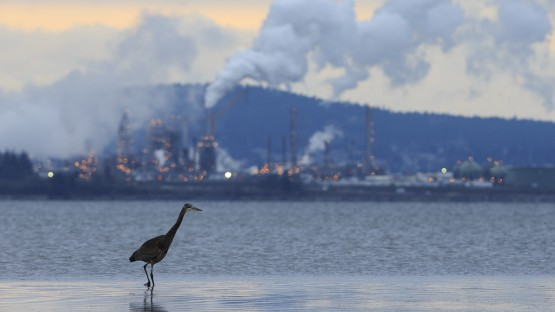 Study: Air pollution laws aimed at human health also help birds - Cornell Chronicle