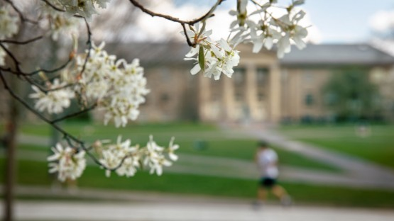 Spring blossoms ring the Arts Quad.