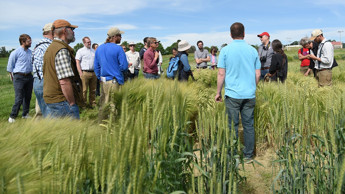 Barley field tour