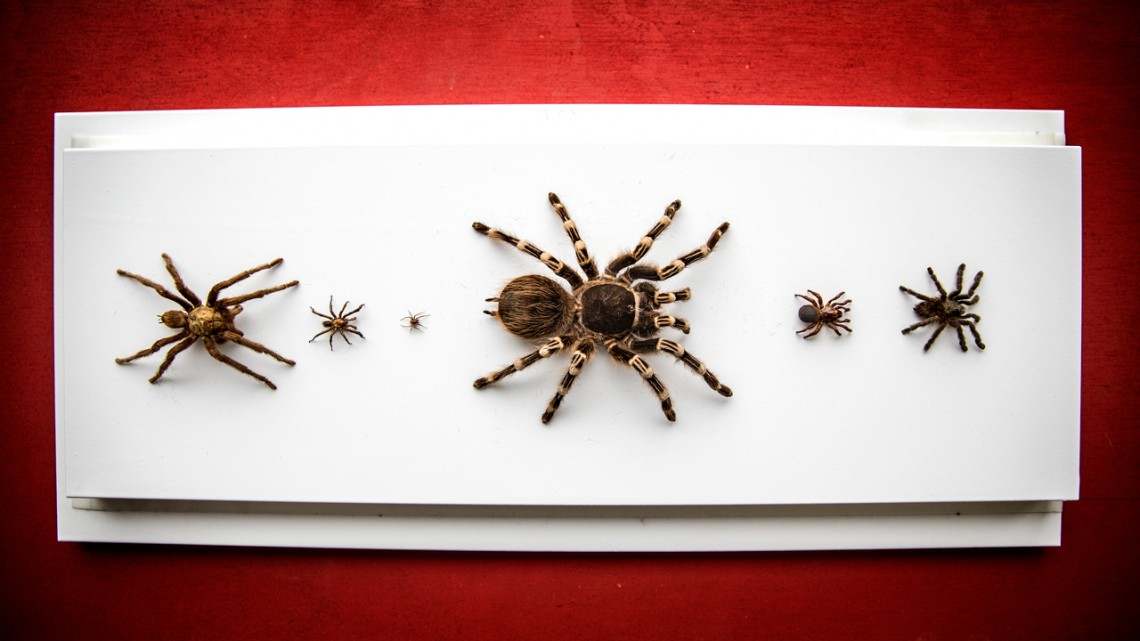 Mounted spiders