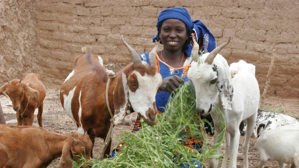 Niger citizen with goats