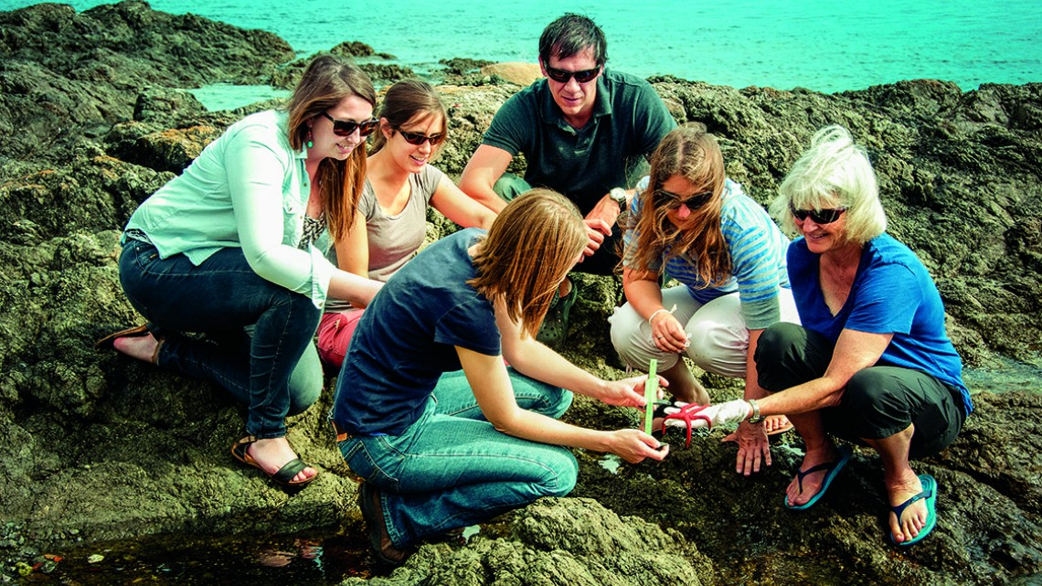 Drew Harvell, examines a sick Pacific blood star with members of the Harvell lab