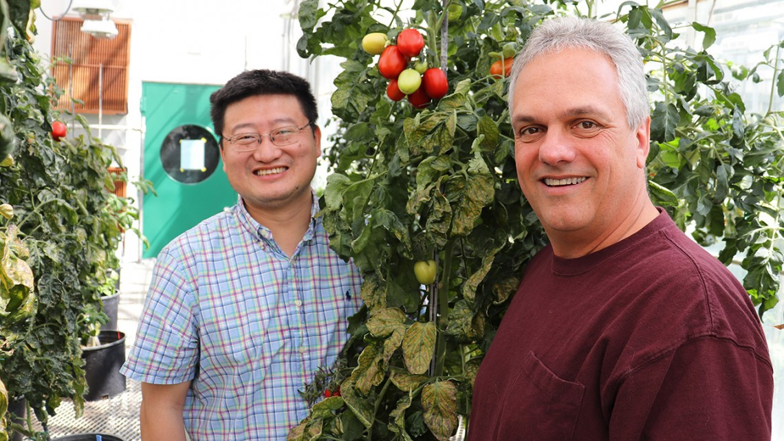 Zhangjun Fei and James Giovannoni pictured in a greenhouse