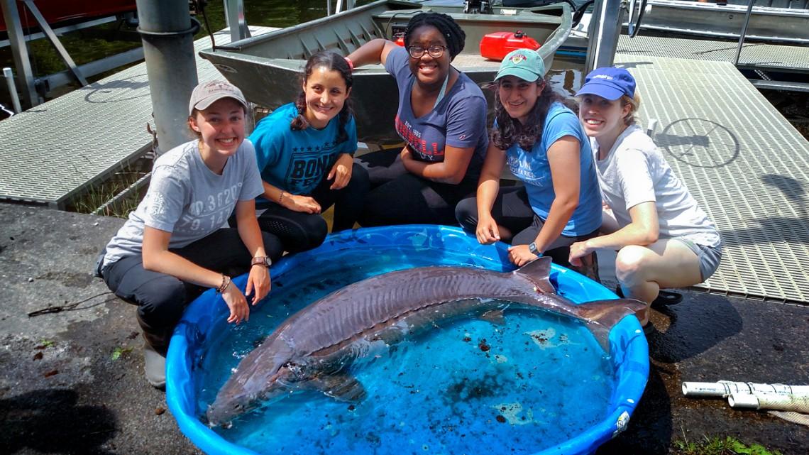 Nice catch: Cornell scientists net 139-pound Oneida Lake sturgeon