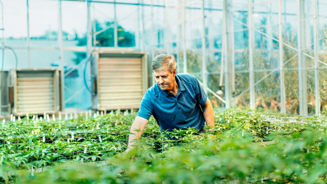 Professor Larry Smart in a greenhouse