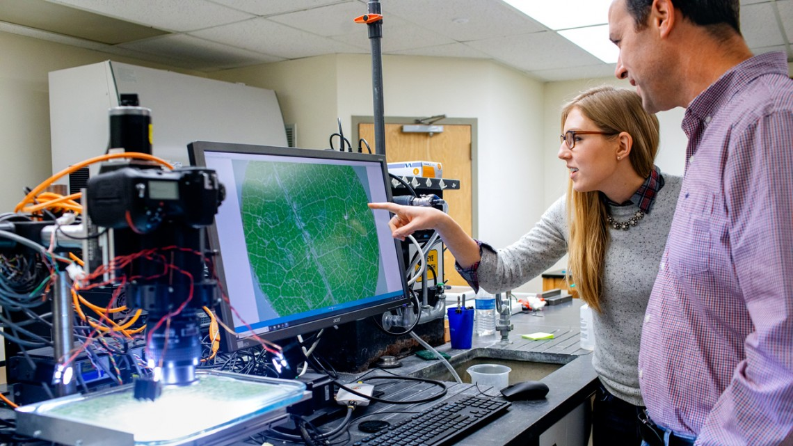 USDA Agricultural Research Service scientists Anna Underhill, left, and Lance Cadle-Davidson at Cornell AgriTech analyze responses of a grape breeding line to powdery mildew, using data from an imaging robot.