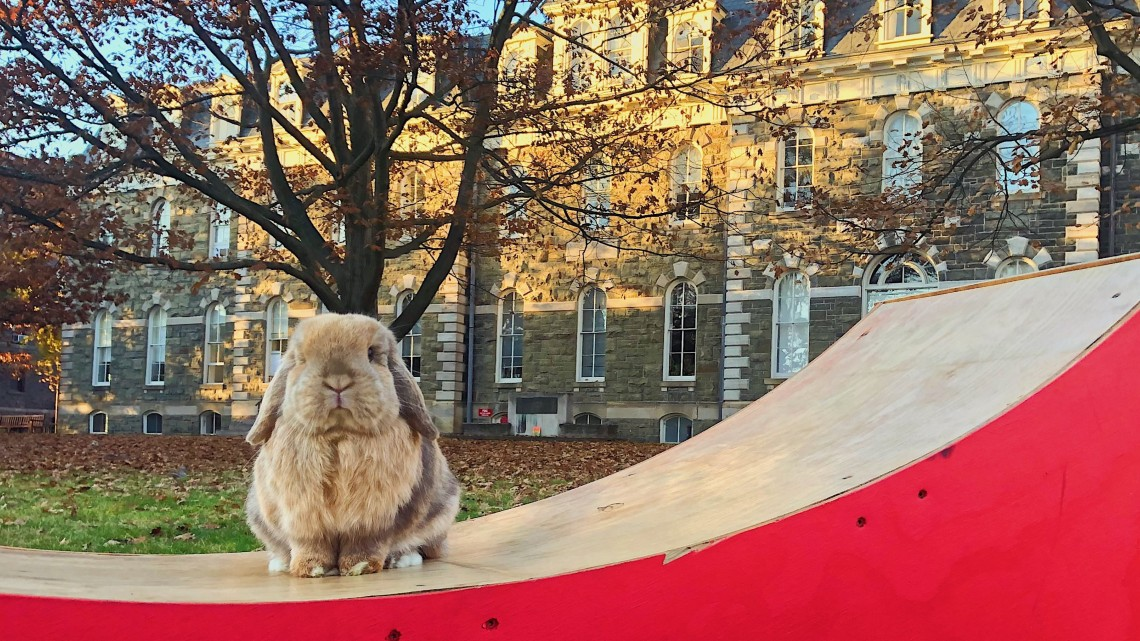 Finn the bunny on the Arts Quad.