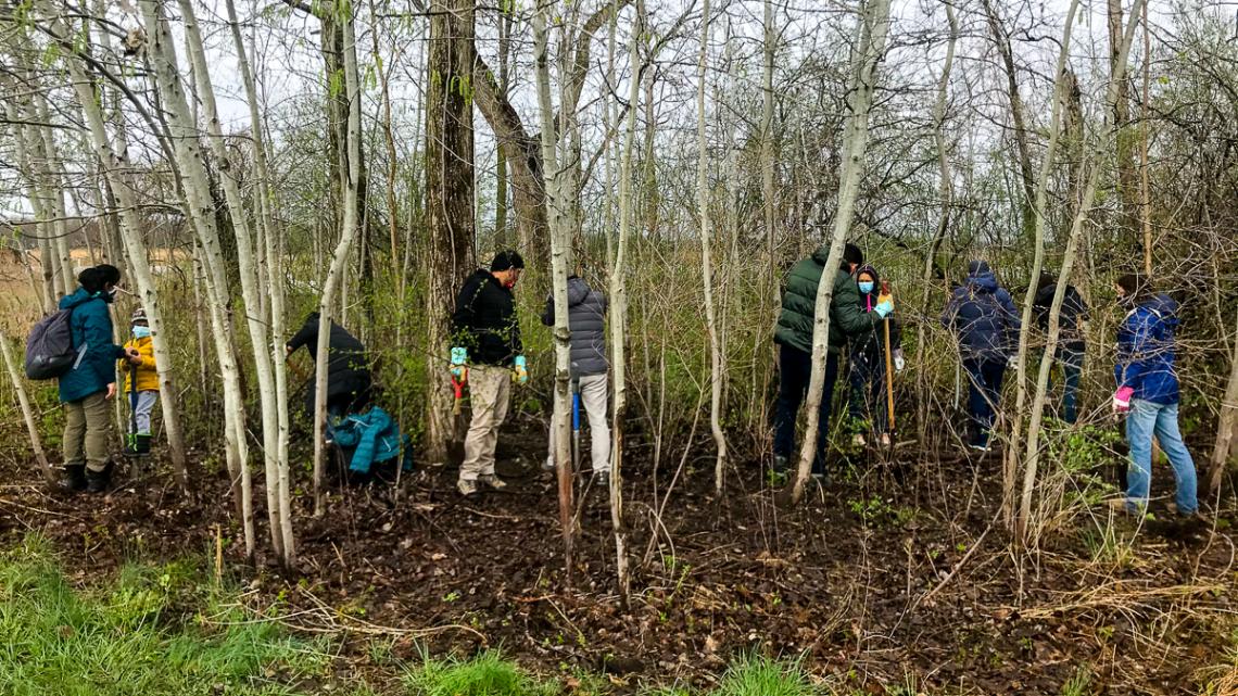 Hubert H. Humphrey Fellows from Cornell remove invasive buckthorn from the Montezuma National Wildlife Refuge.
