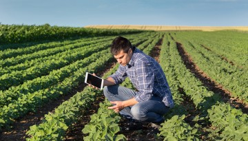 Man with phone checking crops