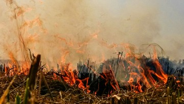 rice straw fires