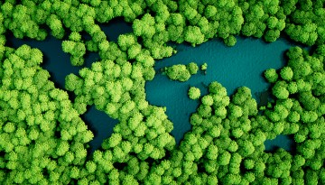 Forests from the air