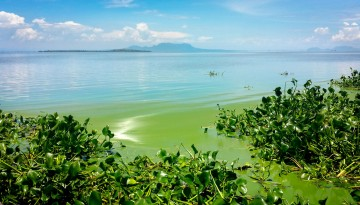 Algal Blooms on Lake Victoria