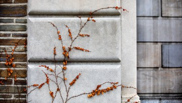 Vines cling to the side of Baker Hall.