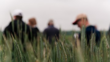four people in a wheat field