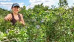 Talia Isaacson picks blueberries