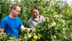 a male and female graduate student look at apple trees